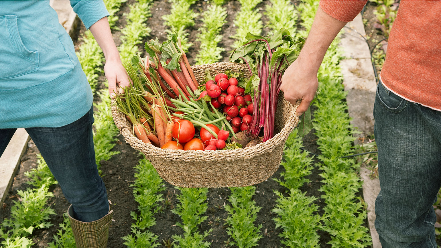 A newly harvested basket of fresh produce
