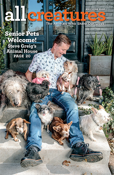 In his cover story for the May-June 2020 issue of All Creatures magazine, Steve Grieg shares how he came to take in more than a dozen senior animals, including a pig and a turkey.