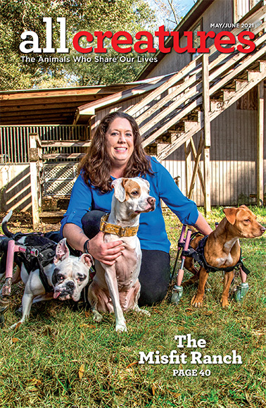 In a story featured on the cover of the May-June 2021 issue of All Creatures, Sasha Corbett shares a story of her home for misfit dogs.