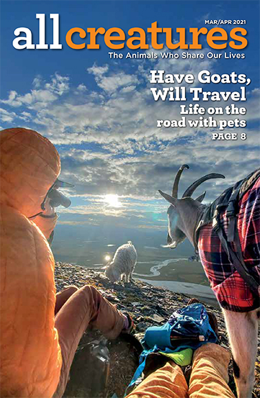 In a story featured on the cover of the March-April 2021 issue of All Creatures, we share tales of animal lovers who take their pets on the road.