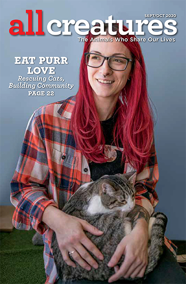 In her cover story for the September-October 2020 issue of All Creatures, Alina Larson talks to the operators of Eat Purr Love, a Columbus, Ohio, cat café where felines and humans mingle.