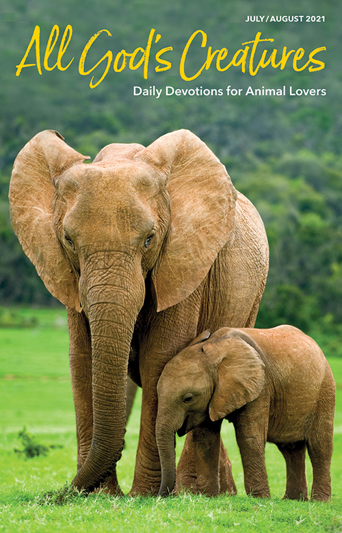 All God's Creatures –Daily Devotions For Animal Lovers