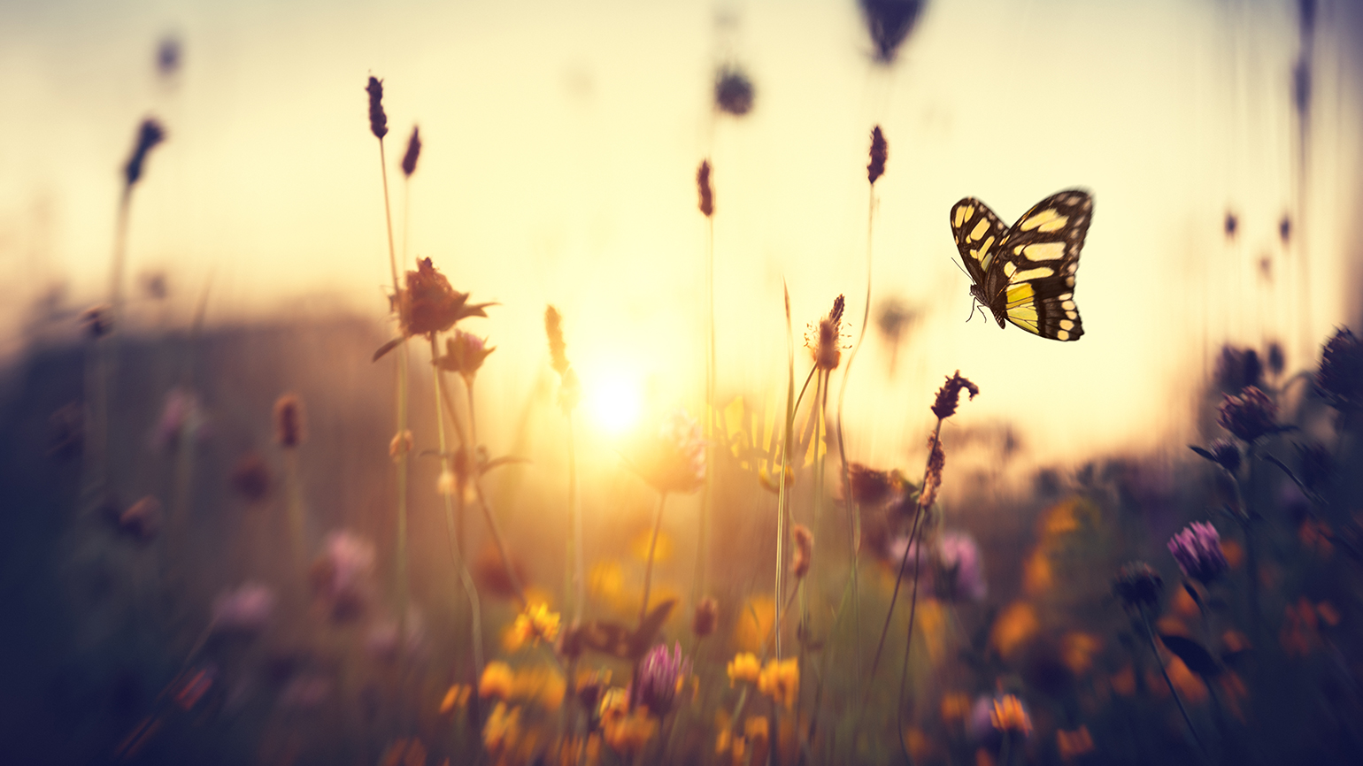 Butterfly among summer flowers