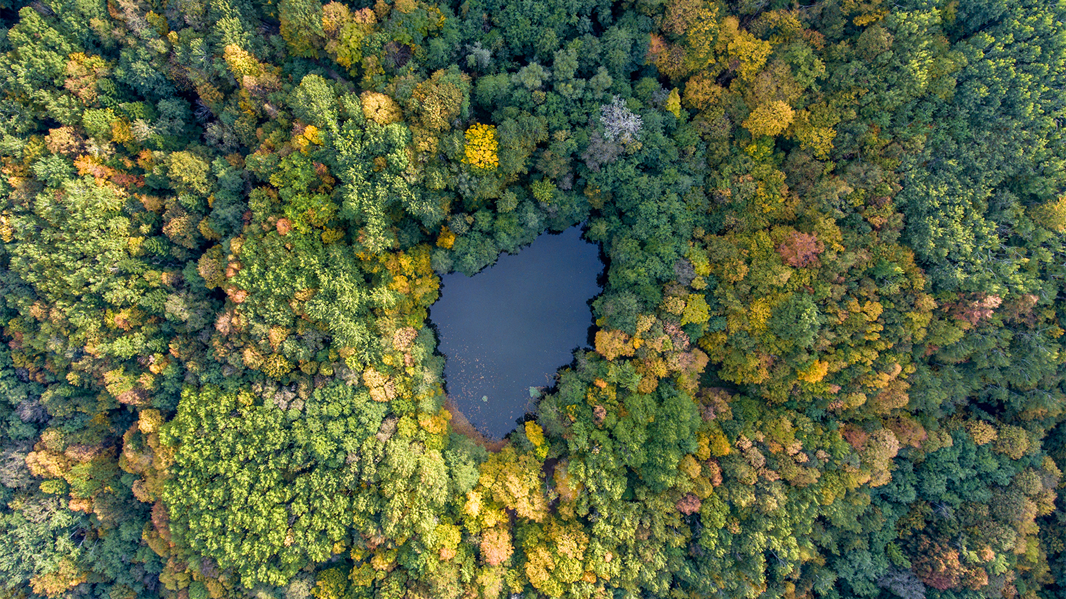 An aerial view of a lush forest