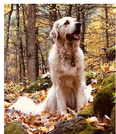 Gracie in the woods