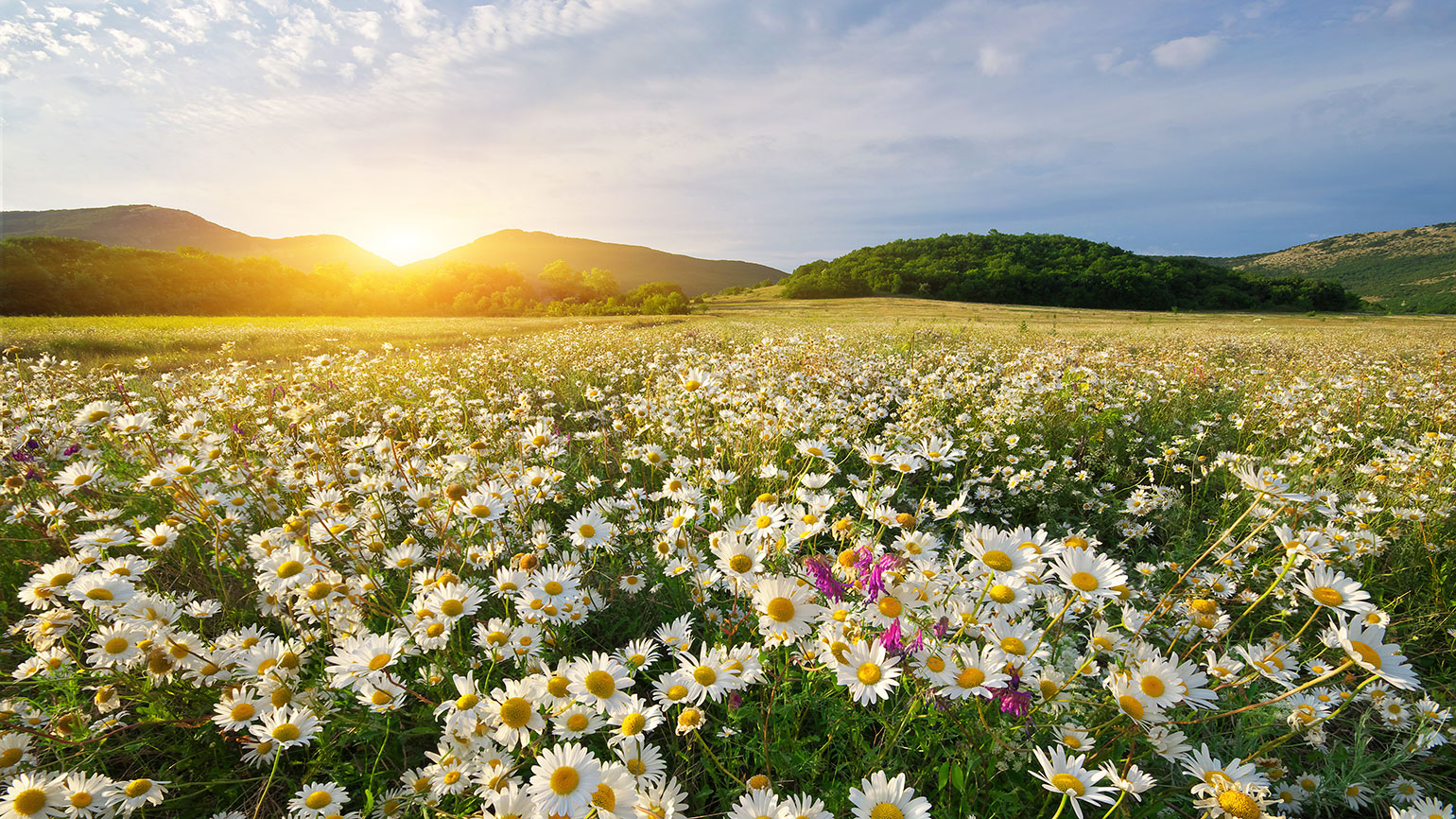 The sun rises over a field of spring flowers