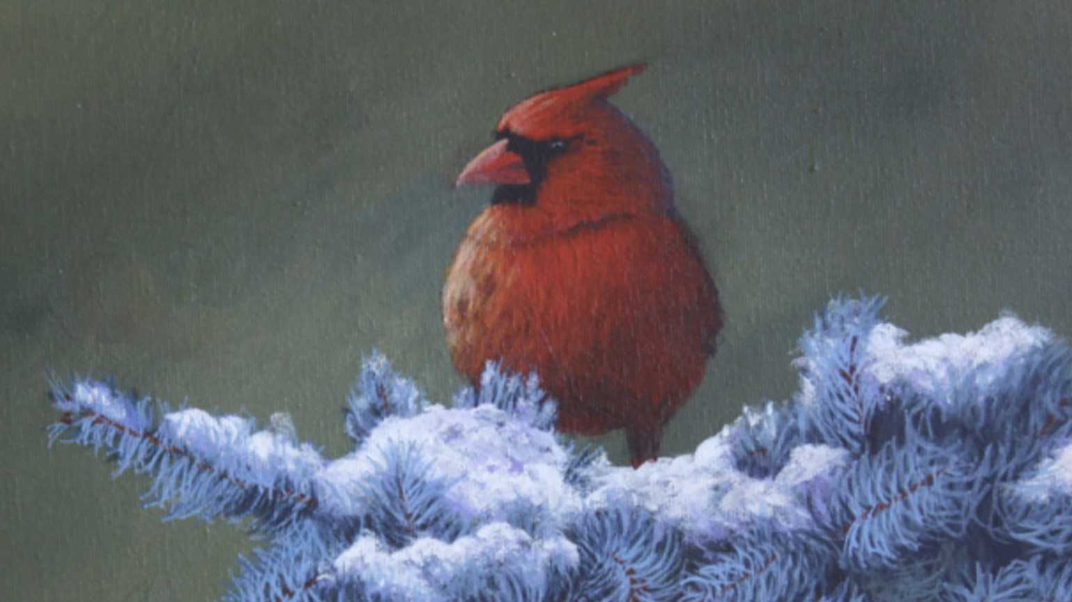 A cardinal perched on a snowy pine tree; Photo courtesy: Sherrie Moffitt