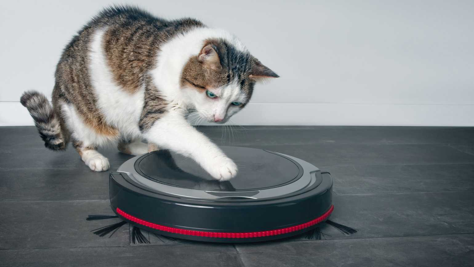 A cat playing with a robotic vacuum.