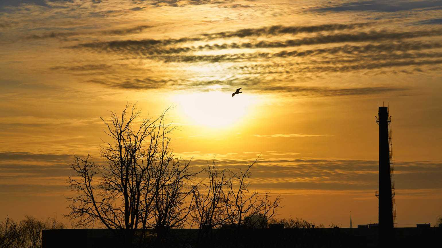 A lone bird flying in the sky.