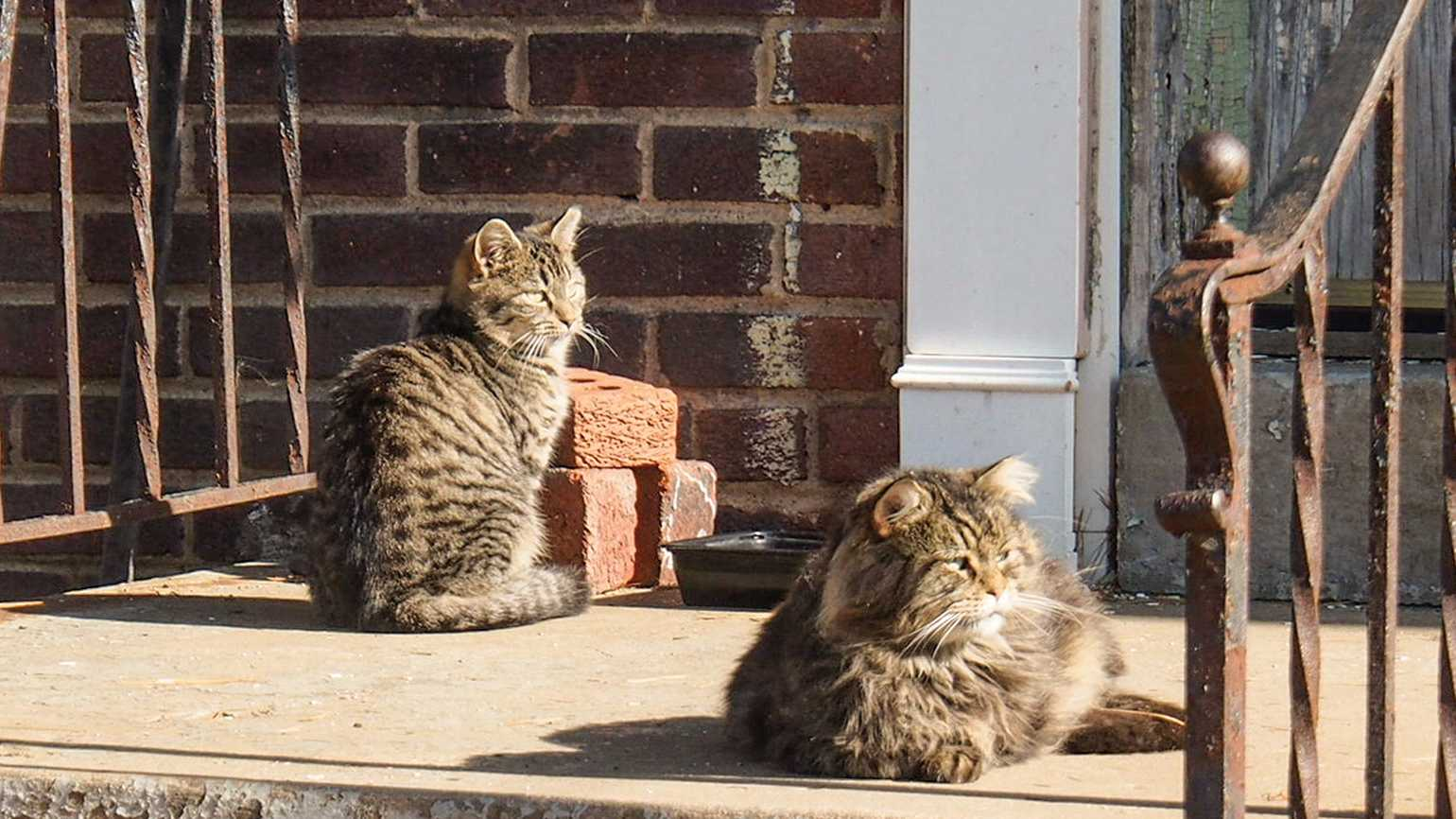 Two stray cats on the lookout.