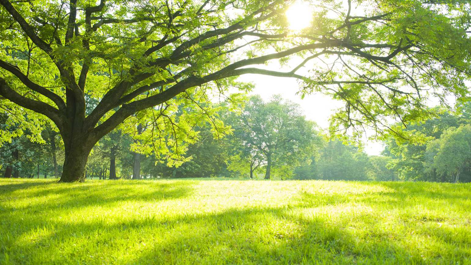A vividly green field with trees as sunlight shines through the branches.