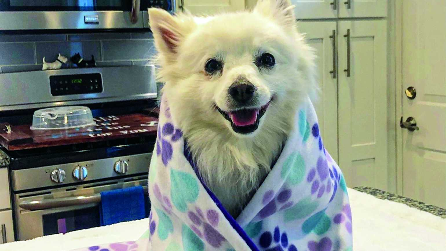 Dog wrapped in a prayer blanket