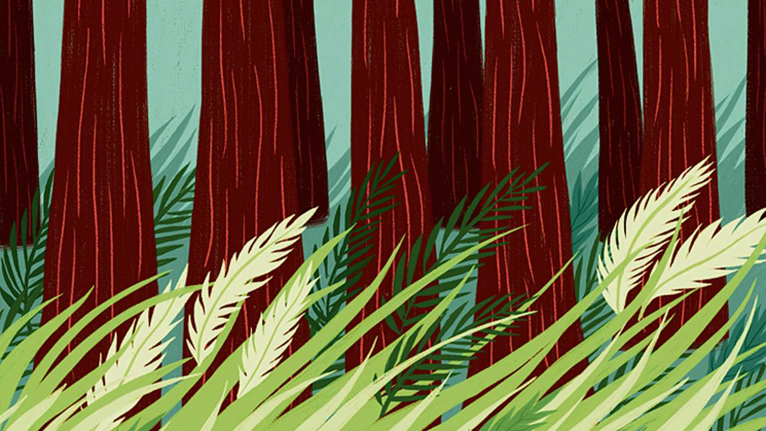 An artist's rendering of wind blowing through the redwoods