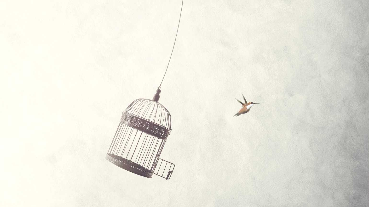 A jailbird flies out of its birdcage.