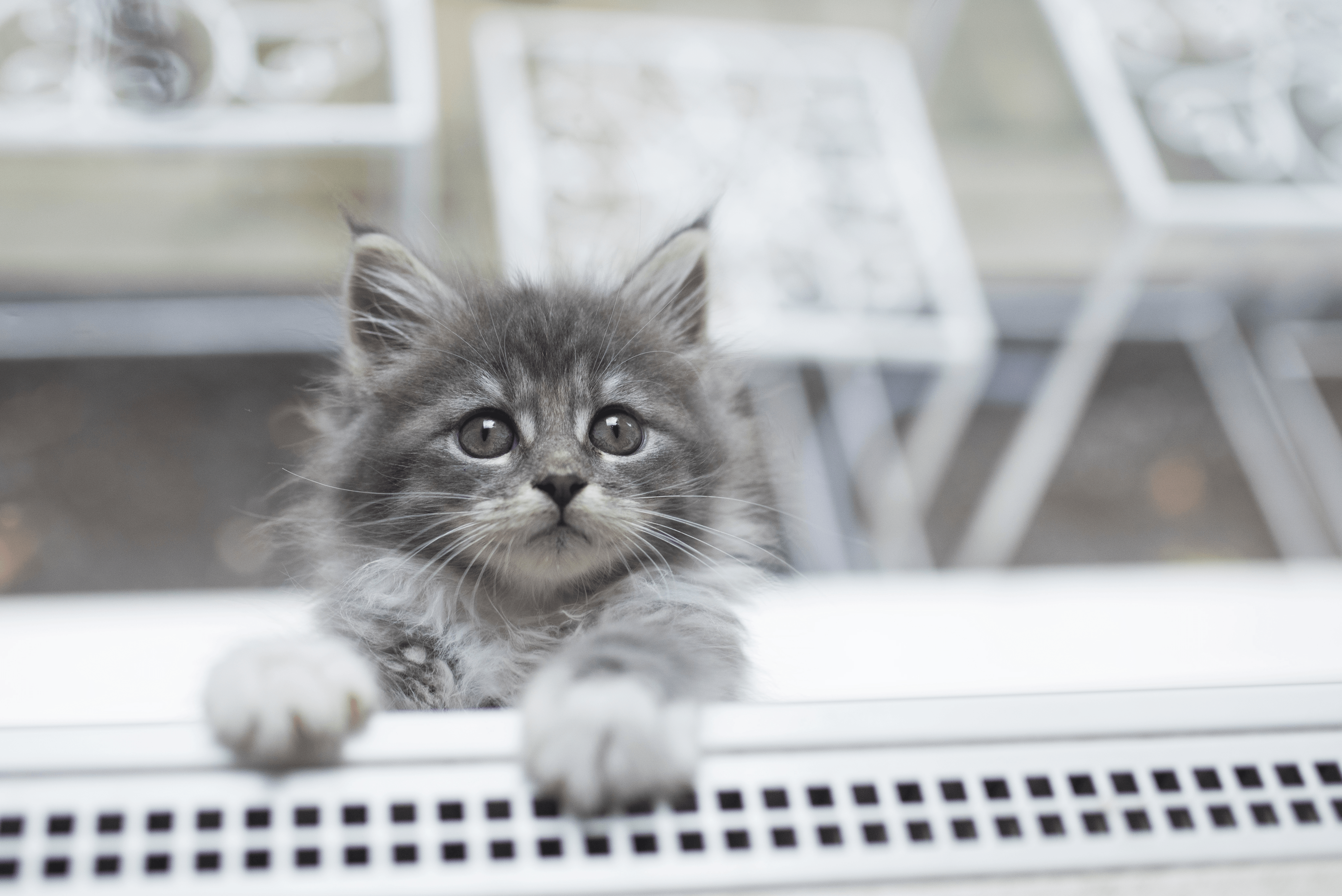 One Thing My Cat Taught Me About Faith