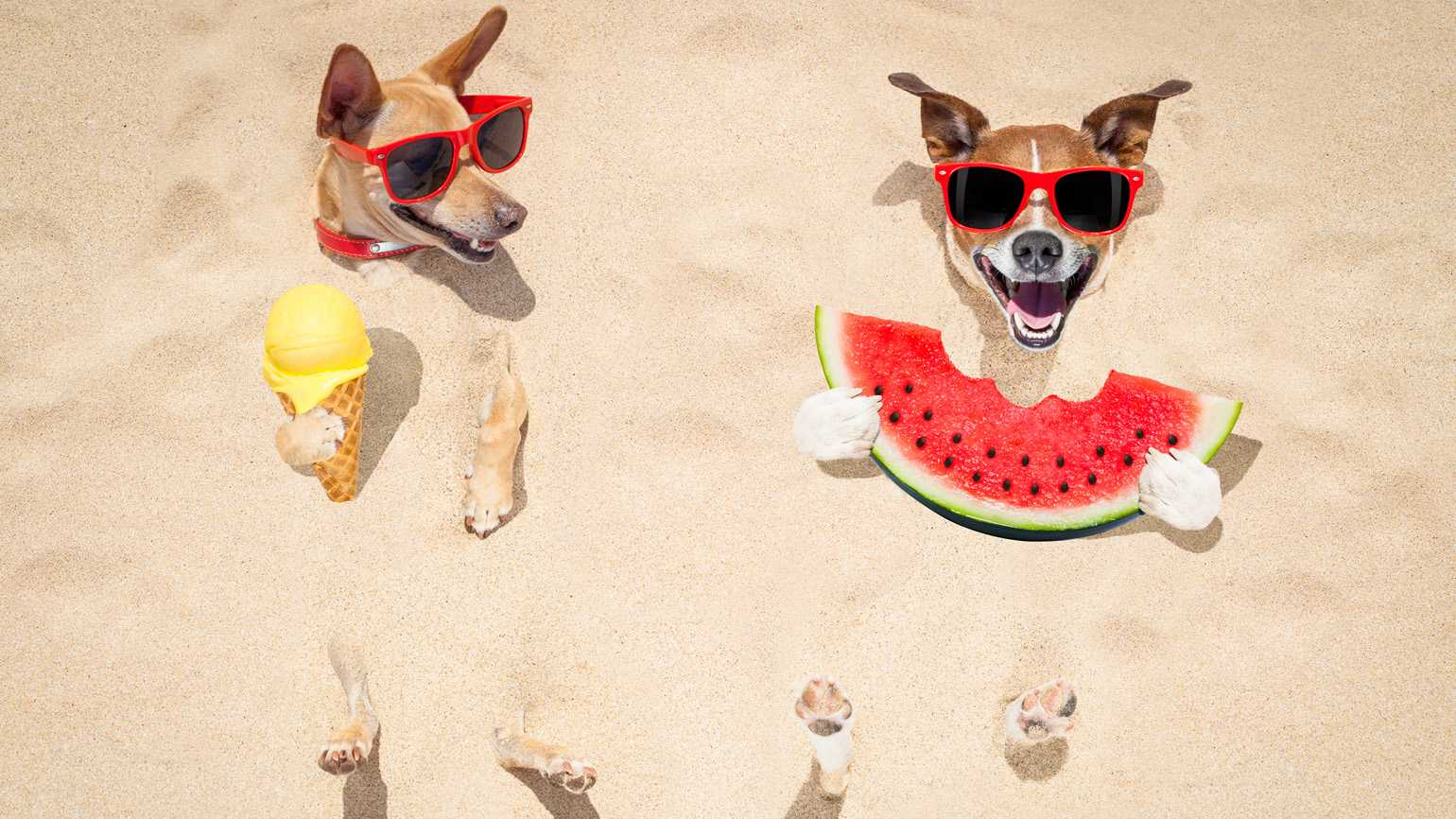 Couple of dogs wearing sunglasses at the beach eating ice cream and watermelon