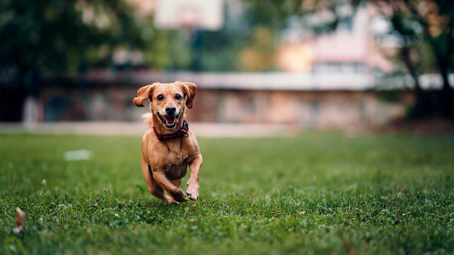 Helpful Tips to Find Your Missing Dog