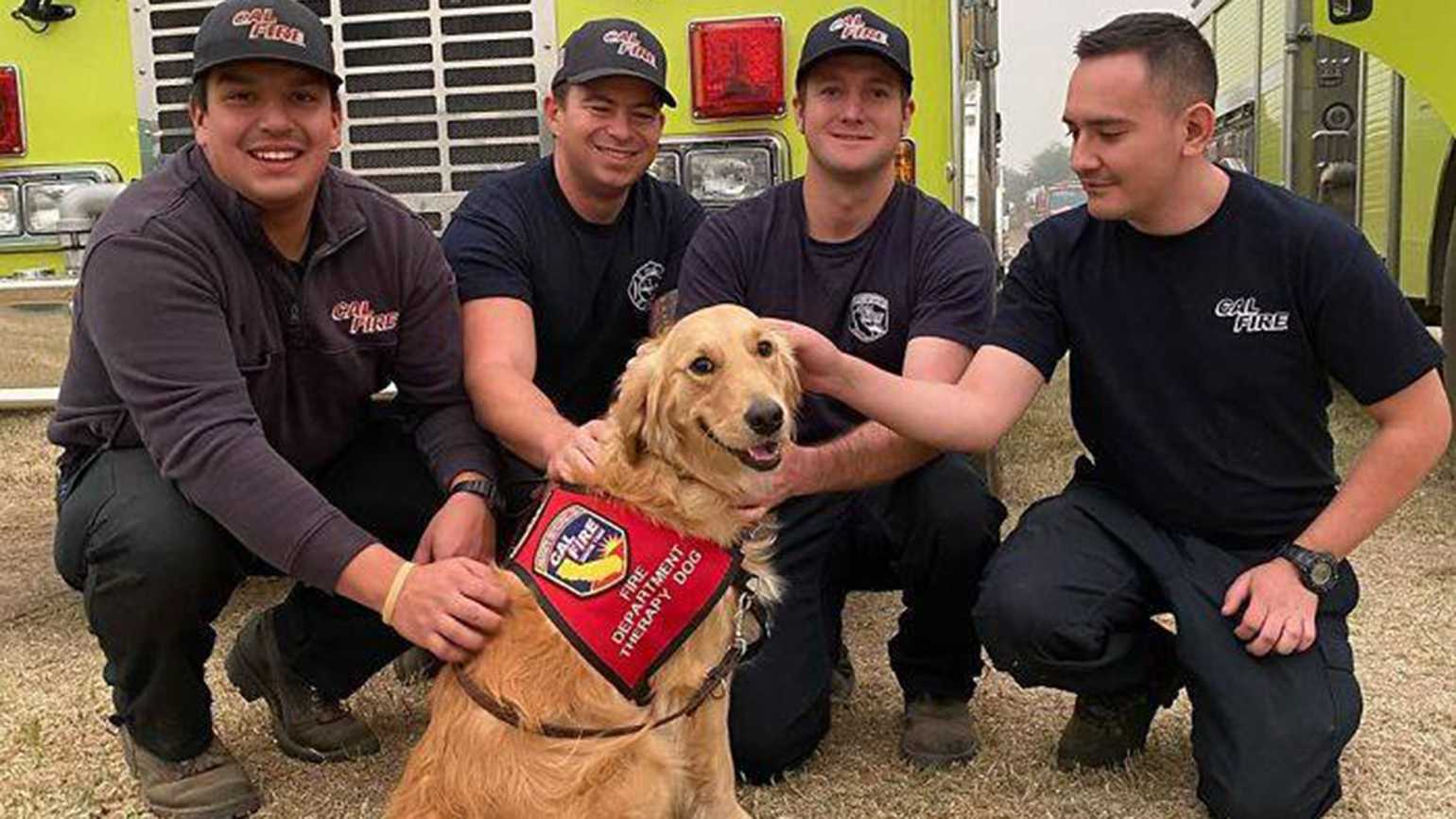 Kerith the golden retriever and firefighters