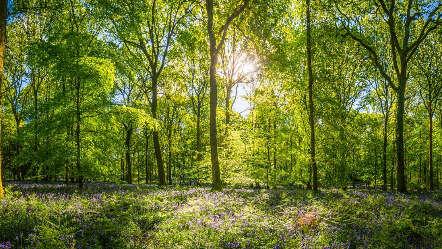 A lush clearing in the midst of the woods; Getty Images