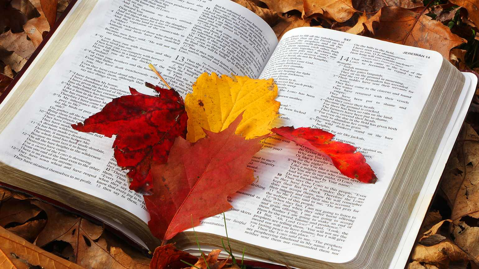 Autumn leaves and Bible verses.