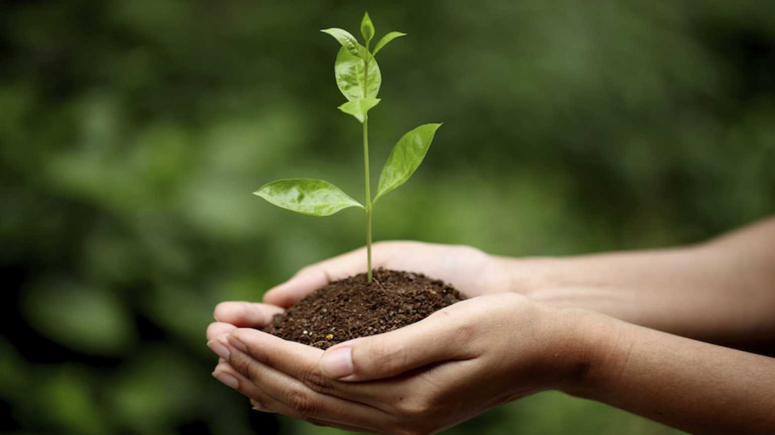 Hands holding a seedling. Thinkstock.