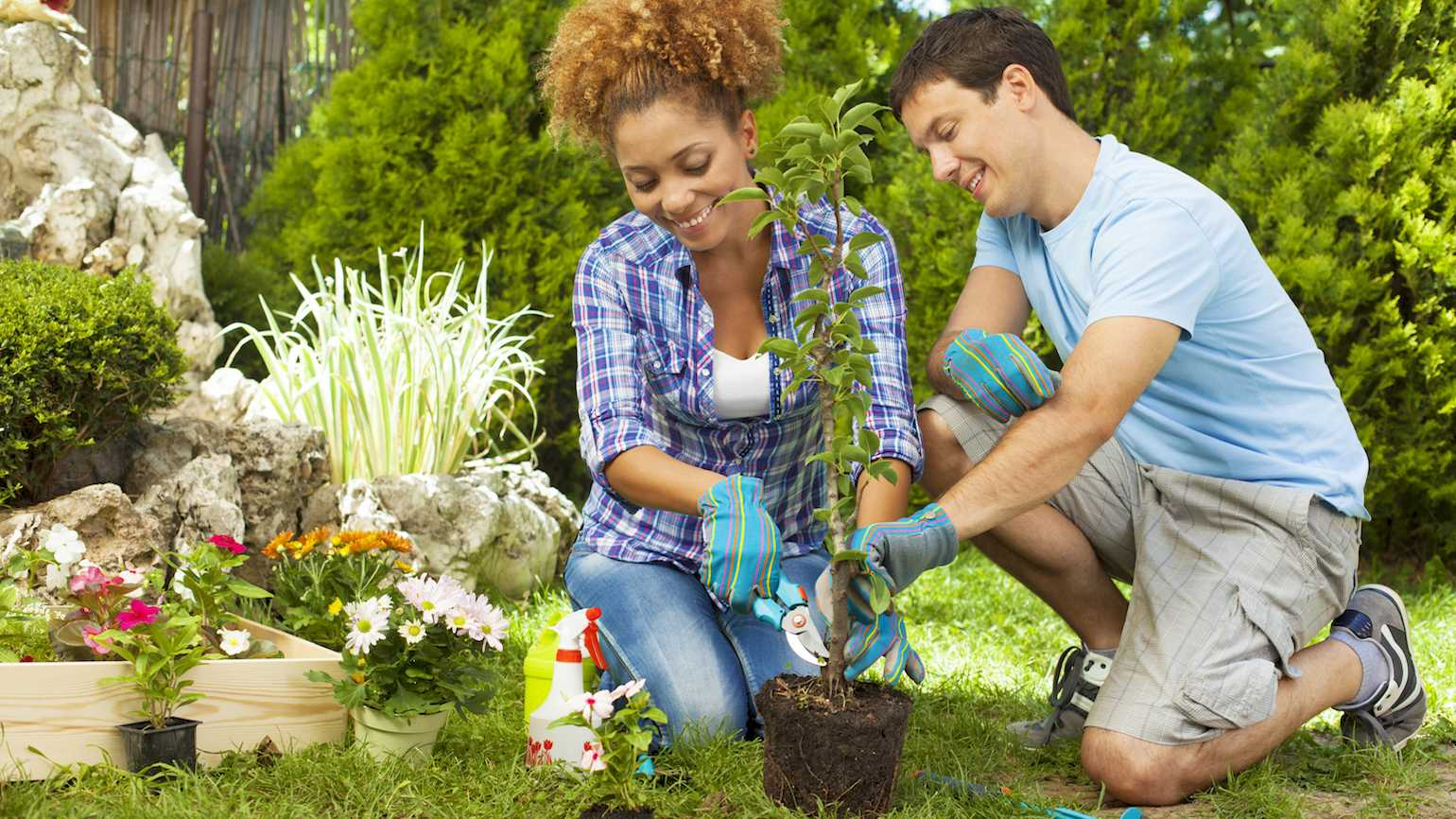 Couple planting a tree