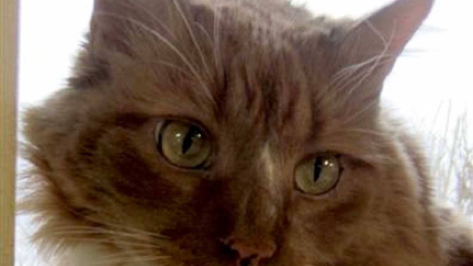 Pudding, an adopted cat, saved her new owner in a true miracle