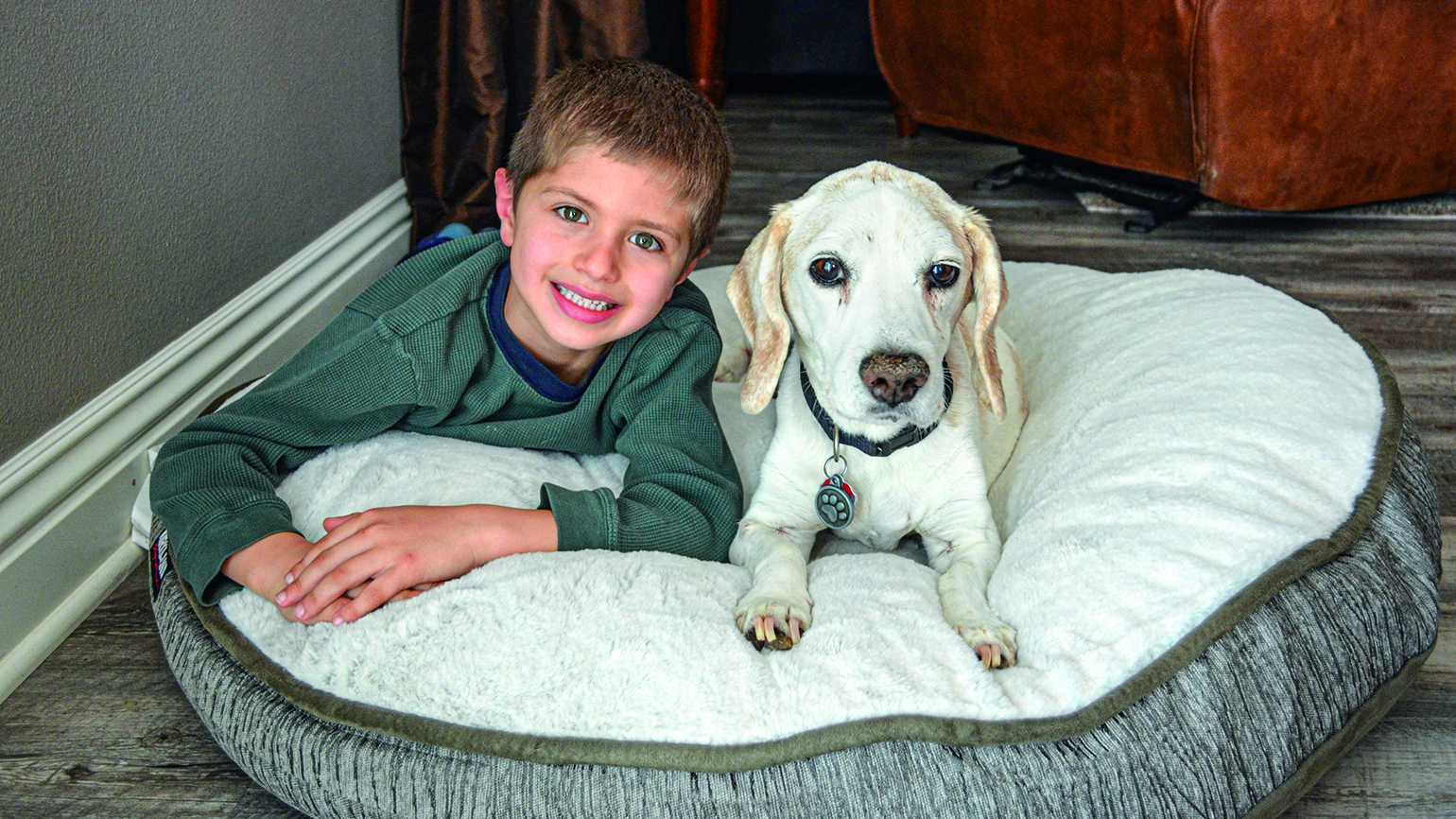 Charlie the beagle and Jack, one of his three human brothers