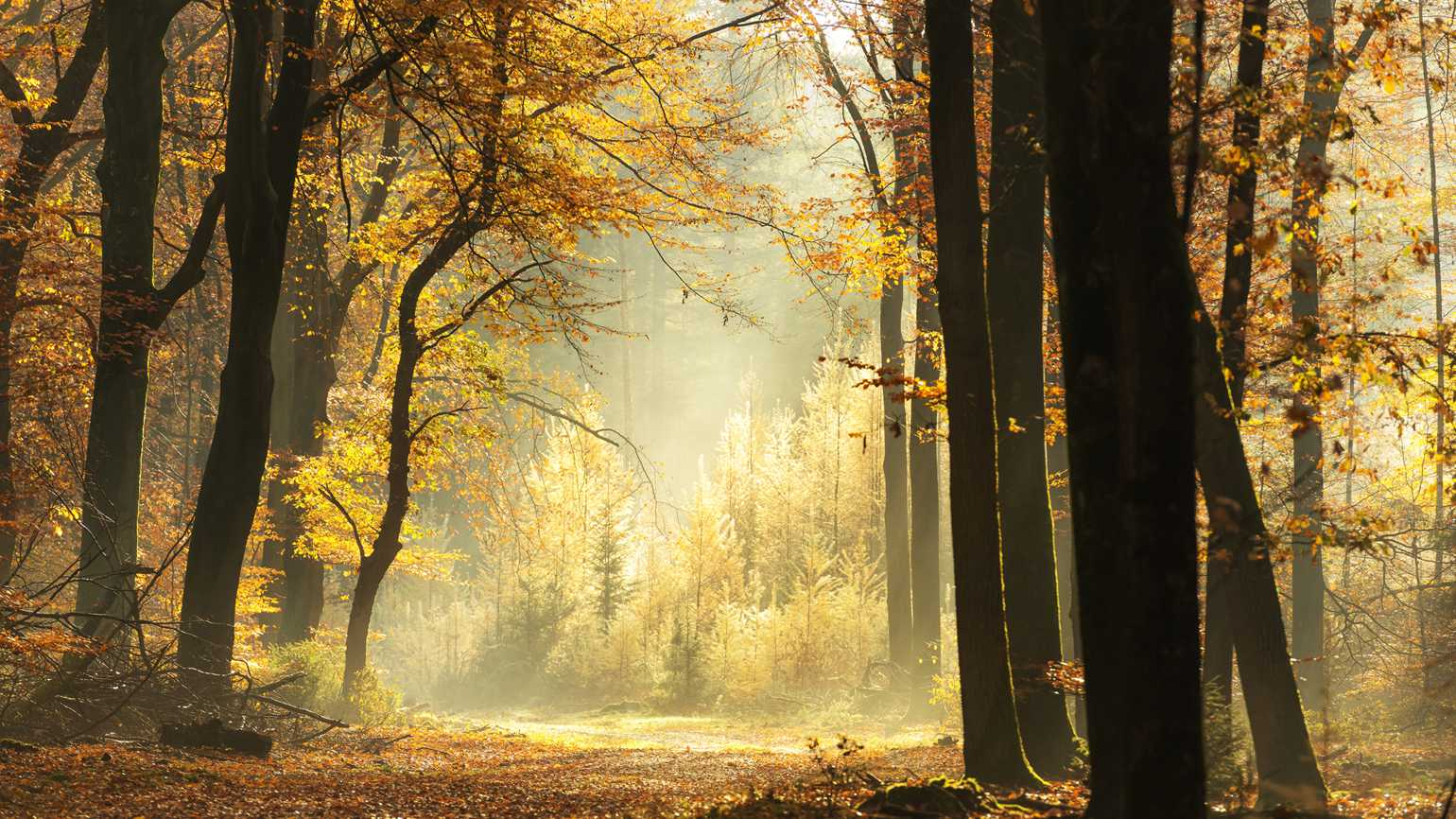 Path through a misty forest during a beautiful foggy autumn day; Getty Images