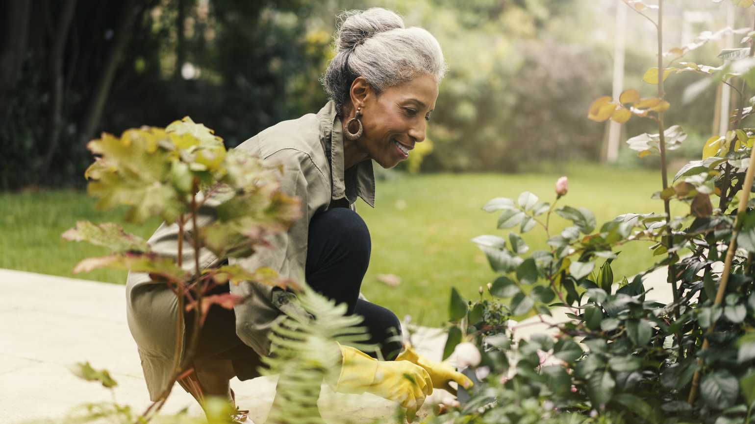 A senior woman gardening outside in the Spring weather.