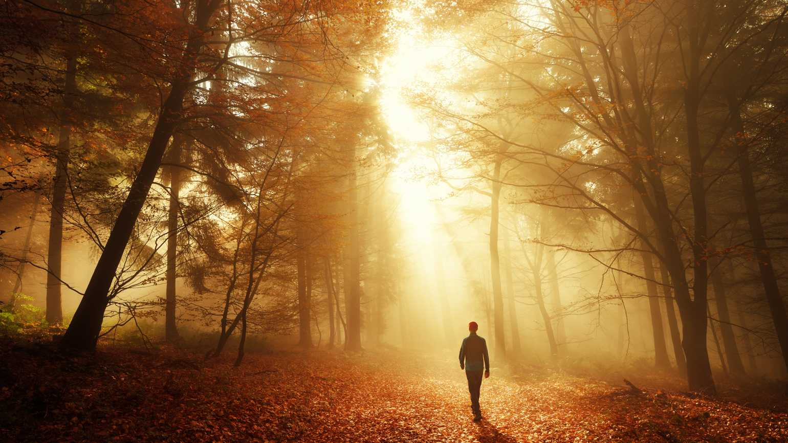 A man walking on a path of light in the woods.