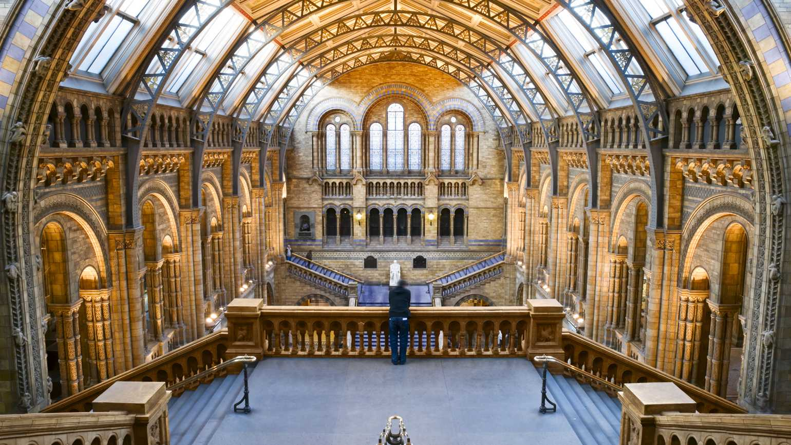 The inside of the Natural History Museum in London.