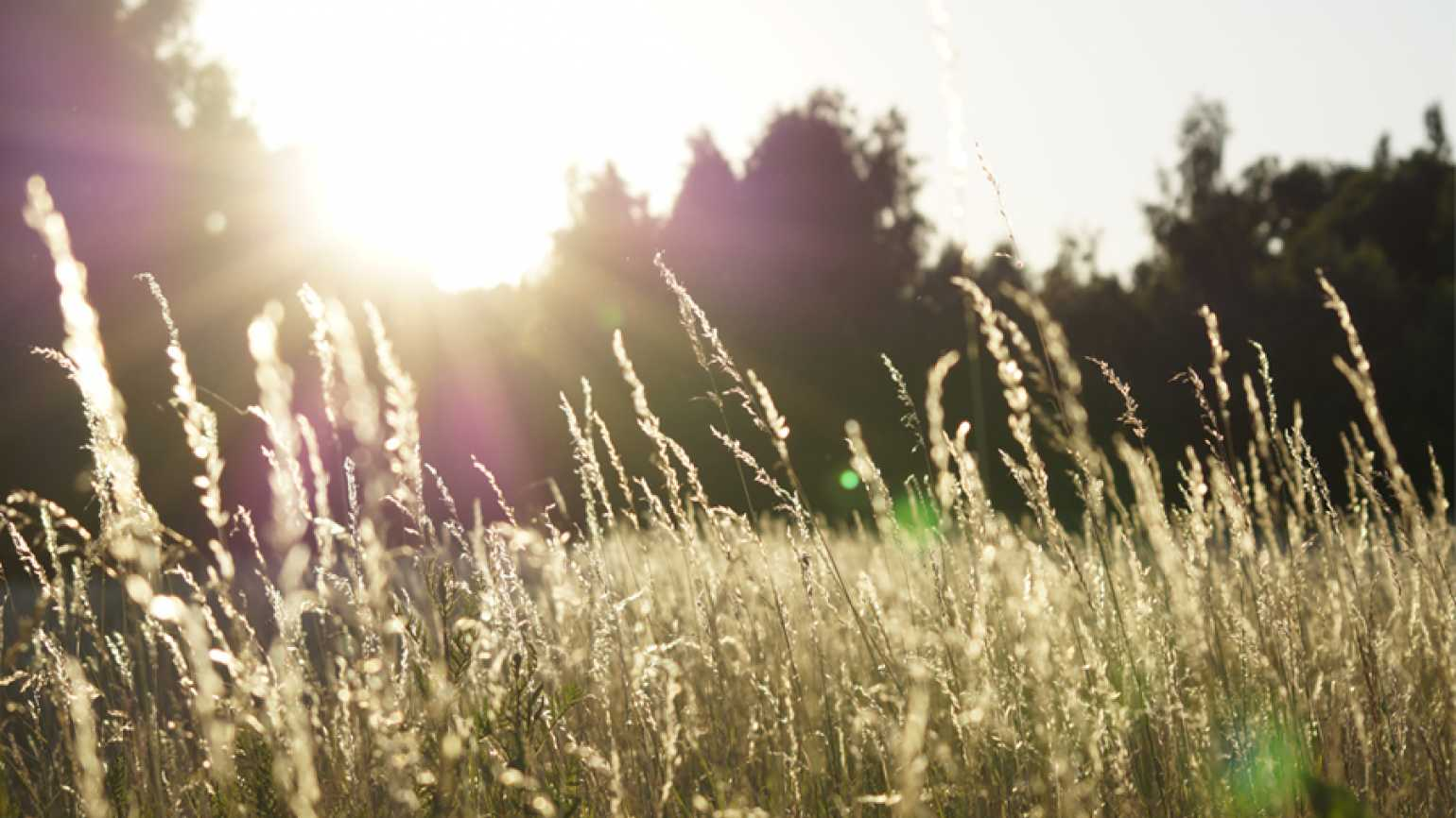 Grassy landscape with sunlight
