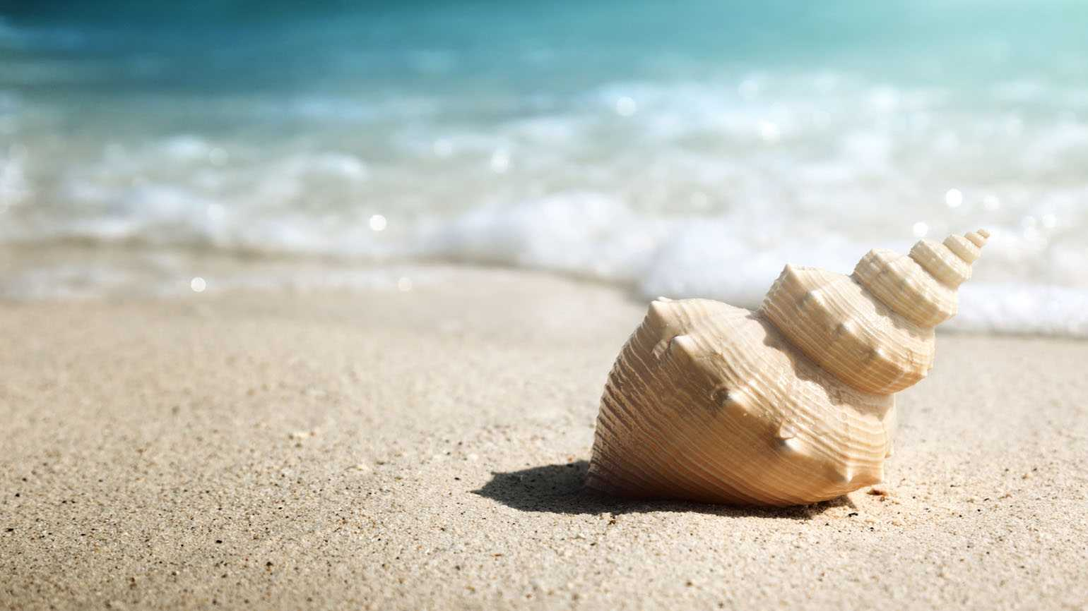 Seashell on the beach; Getty Images