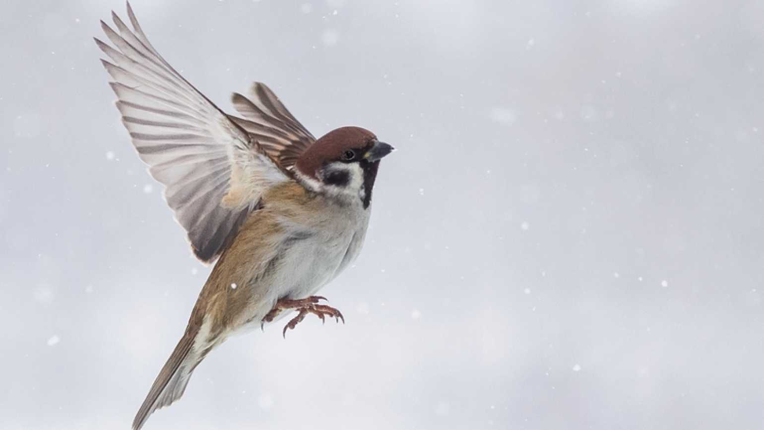 Birds as signs from heaven