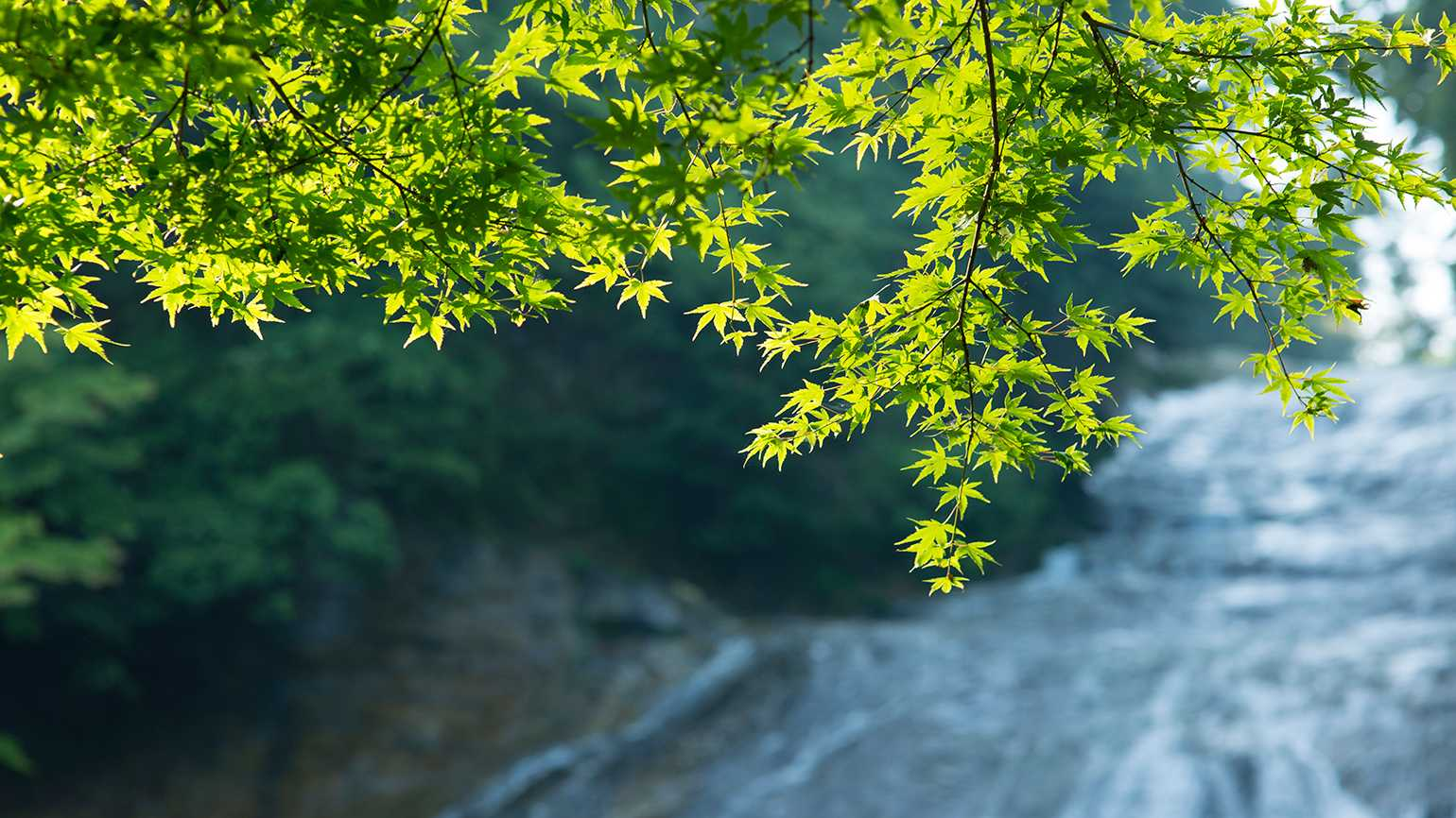 Bright green spring leafs sprout with a waterfall behind them