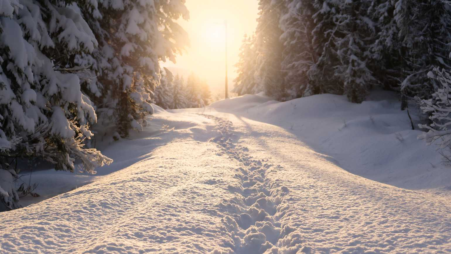 Footprints in snow with sunlight shining through trees; Getty Images
