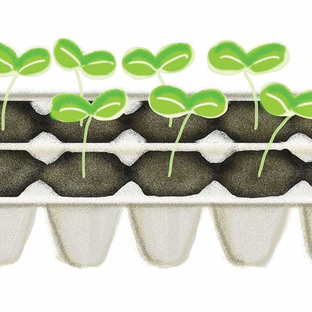 Illustration of seed sprouts in an egg carrton; Illustration by Coco Masuda