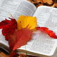 An open Bible surrounded by autumn leaves