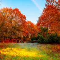 Autumn trees in the meadow