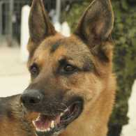 Celebrate our K9 veterans on March 13.