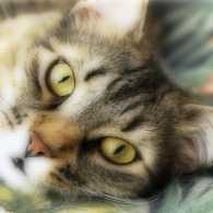 Thank you, God, for cats! June is adopt-a-cat month.