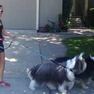 Annette Vivian walking with Snoopy and Rocco. Photo courtesy Annette Vivian.