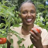 Gardening tips for tomatoes