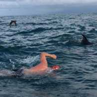 British swimmer Adam Walker with the pod of dolphins that saved him from a shark
