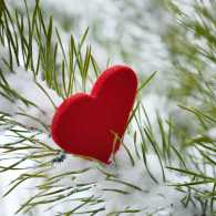 Have a Christmas of the heart!