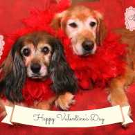 Kelly and Ike send Peggy a valentine!