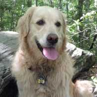 Guideposts Editor-in-Chief Edward Grinnan's dog Millie on the Appalachian Trail