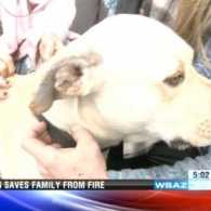 Ghost the dog mysteriously saves family from fire