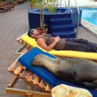 Panchita the seal lounges by the pool with a hotel guest